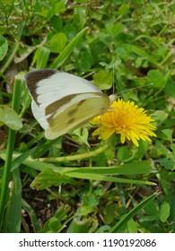 Kelebek butterfly desen speckle doğa bahçe park