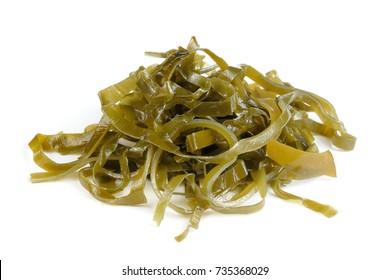 Kelp (Laminaria) Seaweed Isolated on White Background