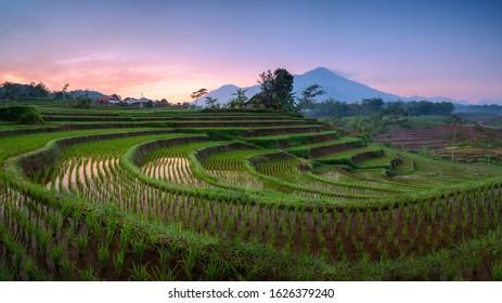 Kemendung Rice Terrace, taken at Trawas, Mojokerto district east java Indonesia - Shutterstock ID 1626379240