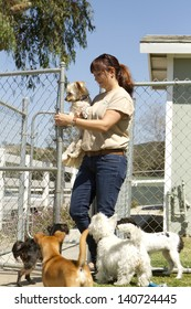 A kennel worker plays with several small dogs.
