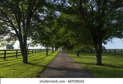 Kentucky Bluegrass Country Farm Drive