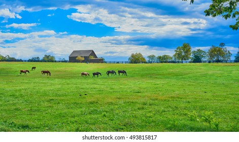 Kentucky Horse Farm - Shutterstock ID 493815817