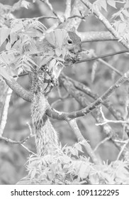Kentucky squirrel by cable line feeding