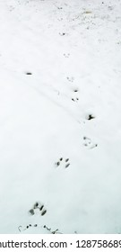 Kentucky's cotton tail rabbit tracks in the snow winter 2019 Nature photography
