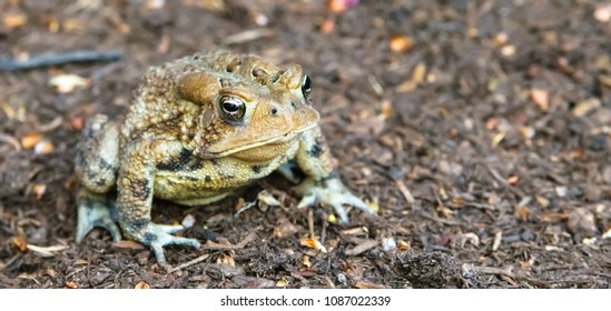 Kentucky's toad looking for bed