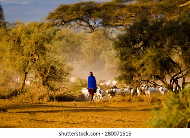 Kenya 2015 January 29 . Masai shepherd with herd of goats on the road to water hole
