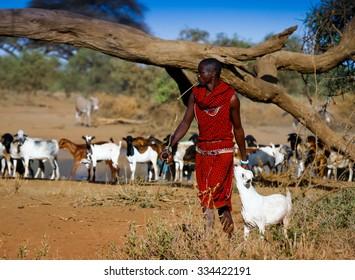 Kenya 2015 Year January 29 . Masai shepherd with herd of goats near water hole in Amboseli  at morning light