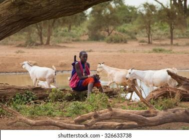 Kenya 2015 Year  January 30 . Masai shepherdess with herd of goats near water hole in Amboseli