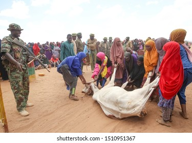Kenya, Africa : August 13, 2019 - A group of Somali women pull a slaughter cows for a their food, thousands of Somali hoping and waiting for help because of hunger and poverty at Dadaab Refugees Camp.