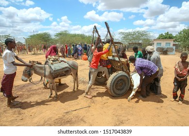 Kenya, Africa : August 13, 2019 - A group of Somali man pull a slaughter cows for a their food, thousands of Somali hoping and waiting for help because of hunger and poverty at Dadaab Refugees Camp.