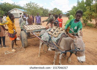 Kenya, Africa : August 13, 2019 - A group of Somali man carry a cattle for a their food using donkey carriages, thousands of Somalis waiting for help due to hunger and poverty at Dadaab Refugees Camp.