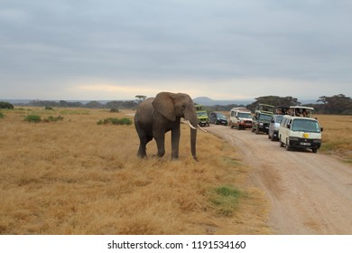 KENYA, AMBOSELI NATIONAL PARK - AUGUST 04, 2018: Encounter with an elephant during a game drive through the Amboseli National Park