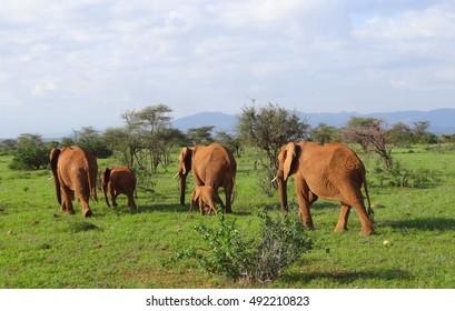Kenya, Elephants