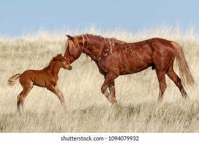 Kenya and Foal