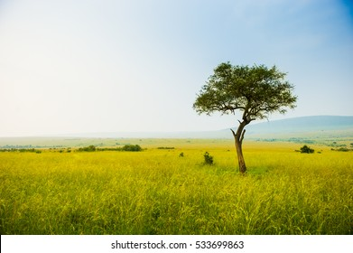Kenya Masai Mara park savannah stunning landscape with a single tree