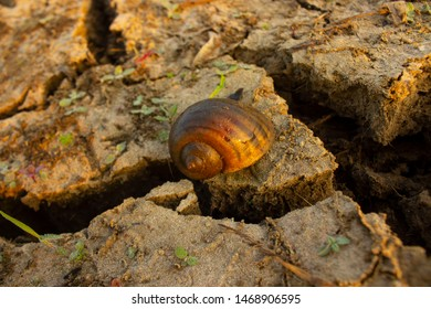 Water Snail Images, Stock Photos & Vectors | Shutterstock