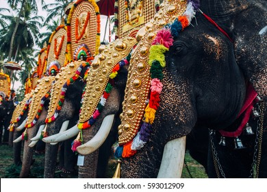 Kerala, India - March, 2016: Thrissur elephant festival. Elephant festival in Kerala. Decorated elephants in India.