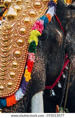 Kerala India March 2016 Thrissur Elephant Stock Photo Edit Now