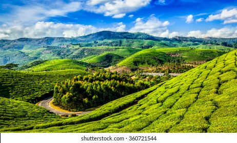 Kerala India travel background - panorama of green tea plantations in Munnar, Kerala, India - tourist attraction