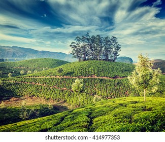 Kerala India travel background - vintage retro effect filtered hipster style image of green tea plantations in Munnar, Kerala, India - tourist attraction