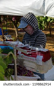 KERN COUNTY, CA - OCTOBER 4, 2018: After harvesting grapes in a San Joaquin Valley vineyard, Mexican-American farm workers are busy packing the fruit for market.
