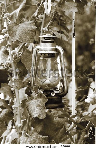 Kerosene lantern hanging in a garden
