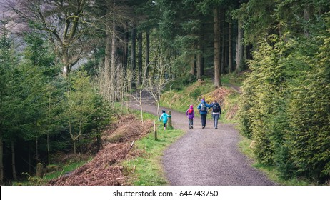 Keswick, UK - April 21, 2017: Family hiking on one of the trails in Whinlatter Forest Park in the Lake District, Cumbria.