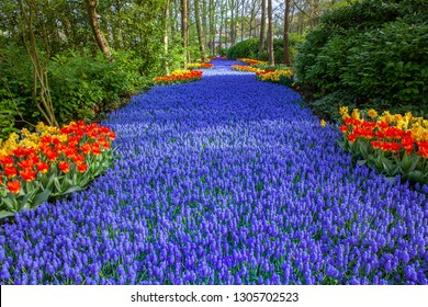Keukenhof Famous  colorful Flowers Gardens Lisse Netherlands