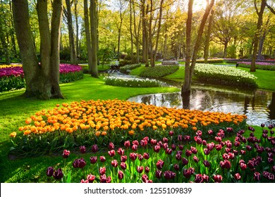 Keukenhof flower garden with blooming tulip flowerbed - one of the world's largest flower gardens on sunset. Lisse, the Netherlands.