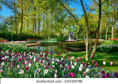 Keukenhof flower garden, One of the world's largest flower gardens. Lisse, the Netherlands.