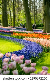 Keukenhof garden beautiful floral in Netherlands.
