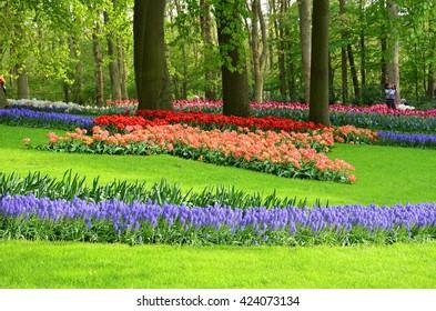 Keukenhof garden, Netherlands -May 10: Colorful flowers and blossom in dutch spring garden Keukenhof which is the world's largest flower garden. Keukenhof Garden, Lisse, Netherlands - May 10, 2015
