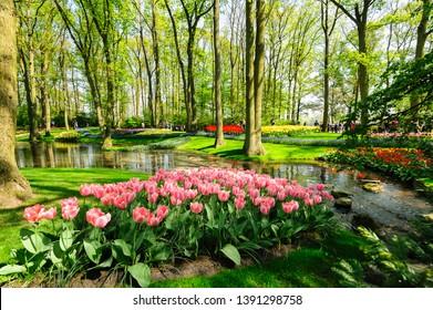 Keukenhof, Lisse, Netherlands - 21 April 2019: Luxury flowerbeds in Keukenhof, the world's largest flower and tulip garden park in South Holland.