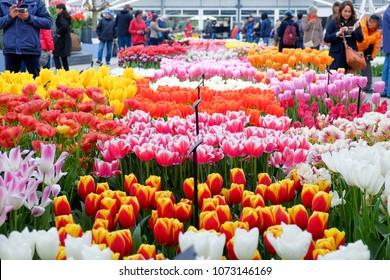 Keukenhof, Netherland - April 12, 2018 : Keukenhof is the most beautiful spring garden in the world. More than seven million tulips.