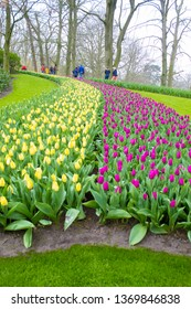 Keukenhof, The Netherlands 6.04.2019: Blooming Colorful Flower Beds Cover  The Whole Garden