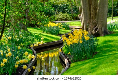 Keukenhof, Netherlands. April 2019. Daffodils and narcissi overlooking the water at Keukenhof Gardens, Lisse, South Holland. Keukenhof is known as the Garden of Europe.