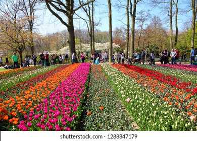 KEUKENHOF PARK, LISSE, NETHERLANDS - APR 09, 2017 : Garden of Europe. Magic spring Dutch flowers blossom. Visitors from all over the world enjoy the Keukenhof Tulip Festival and take a pictures