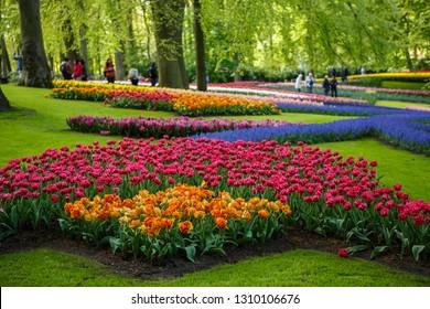 KEUKENHOF,NETHERLANDS-26 APRIL,2018: Famous tulip museum Keukenhof.Popular tourist area in Holland.Beautiful tulips flowers grow in spring time.