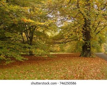 Kew Gardens, Autumn nature