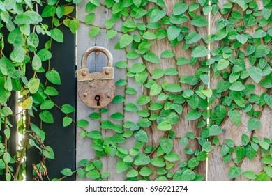 Key in Garden