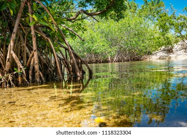 KEY LARGO, FLORIDA / USA - 06/08/2018: Mangrove lined saltwater shallow channel in the Florida Keys Post Hurricane Irma - Resilient Nature
