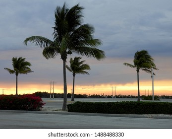 Key West Sunset with Palm Trees