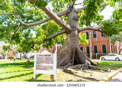 Key West, USA - May 1, 2018: Kapok old large oak tree sign historic landmark on street architecture with tourist information sign in Florida city travel, sunny day