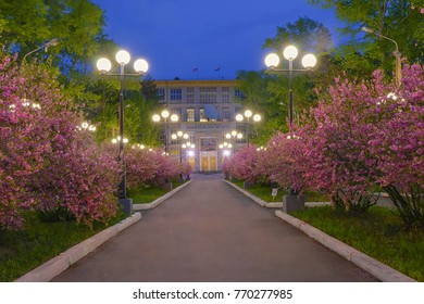 Khabarovsk, Russia - May 17, 2017: Night sakura alley. Pacific National University. Khabarovsk, far East, Russia.