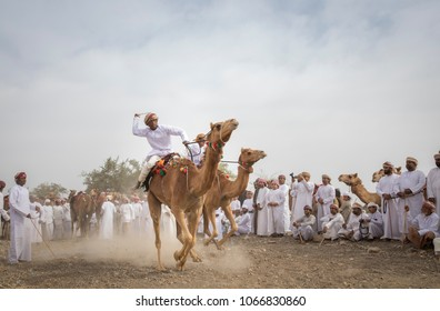 Khadal, Oman, April 7th, 2018: omani man riding a camel on a dusty countryside road