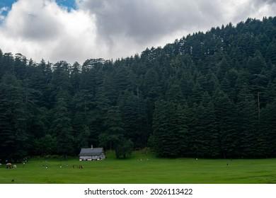 Khajjiar Mini switzerland of india, Dark landscape with view of devdar tree and house. - Shutterstock ID 2026113422