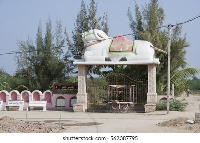 KHAMBHAT, GUJARAT / INDIA - JANUARY 11, 2017 : THE STATUE OF A WHITE BULL (NANDI) AT THE ENTRANCE GATE OF THE TEMPLE OF THE LORD SHIVA, FOUND IN RALAG VILLAGE, IN KHAMBHAT, INDIA.