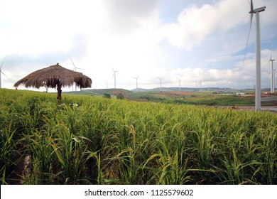 Khao Kho Wind Farm.This place have many strawberry garden and good view on khao kho. And the good feeling for breath.