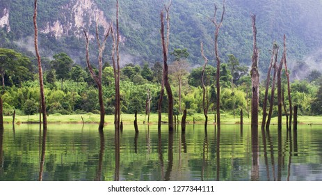 Khao Sok national Park .Thailand