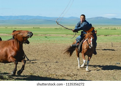 KHARKHORIN, MONGOLIA - AUGUST 19, 2006: Unidentified Mongolian man wearing traditional costume catches young wild horse from a herd in a steppe in Kharkhorin, Mongolia.